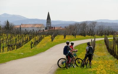 Wine cycling tour in Slovenia the vineyards and bikes