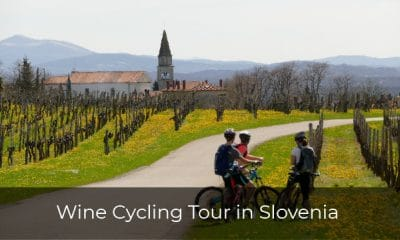 Cycling through wineyard on Karst