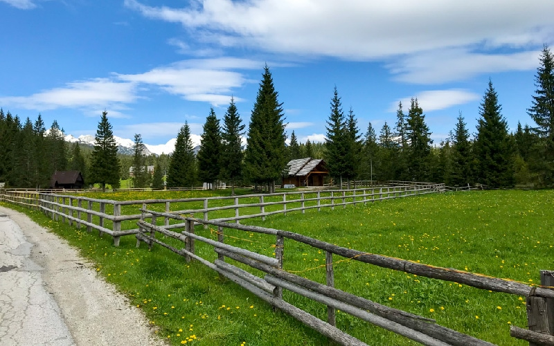 Green fields and blue sky at Pokljuka